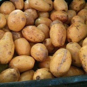 Frutas exóticas, como cajamanga