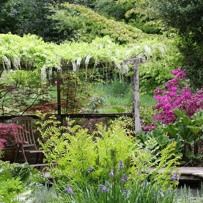 Water garden, decking in June