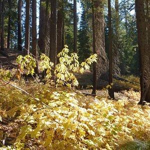 King's Canyon NP North Grove Loop Trail
