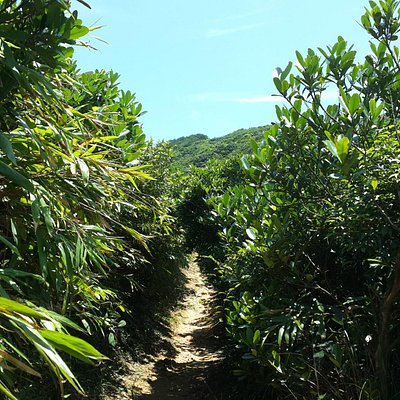 tropical trail