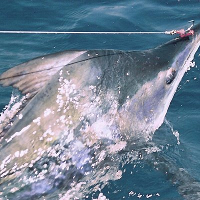 Central Coast Reef & Game Fishing Marlin