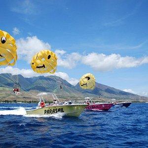 Our Fleet of Ocean Pro 31's -