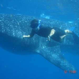 More Whale sharks!