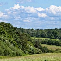 View across hay meadows, Trent Country Park