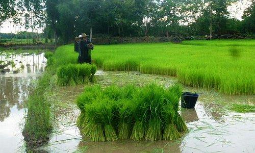 Séjour Eco- solidaire en Isan