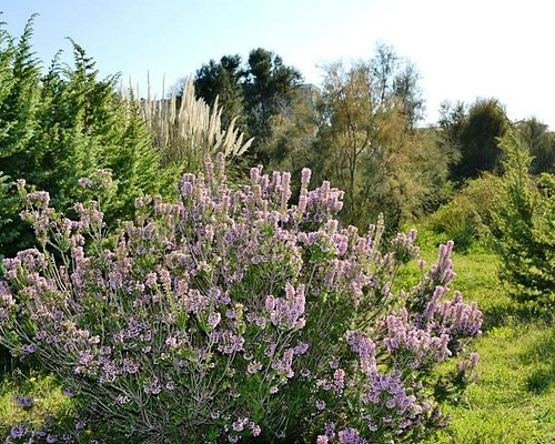 Giardino Botanico Mediterraneo