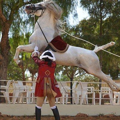 Classical Lusitano Horse Show