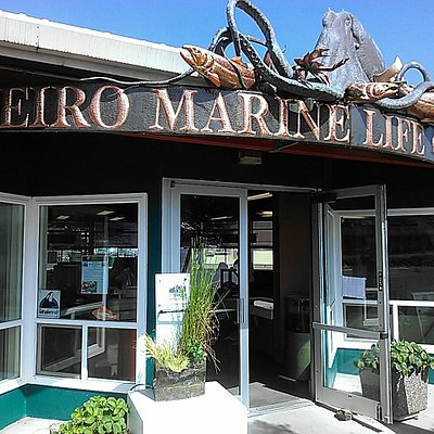 Feiro Marine Life Center offers hands on tidepool experiences