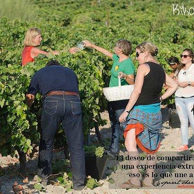 vendimia con nosotros, experiecias spirit Visita a viña