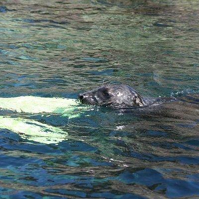 Seals love to sneak up behind snorkellers