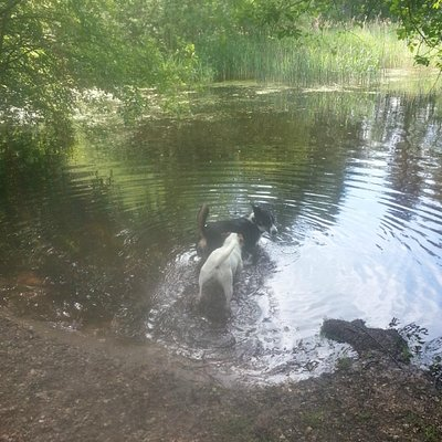 Enjoying the pond