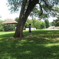 Mature trees/bird watching