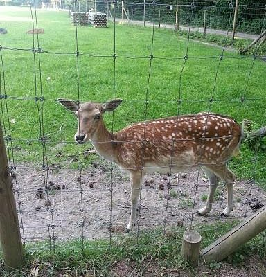 Only managed to see 1 young deer up close
