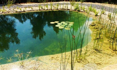 de ecologische zwemvijver