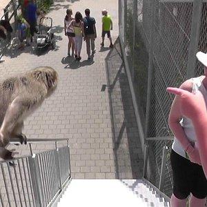 A quattrocchi col primate