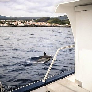 Fishing, dolphins and whales in the same trip!!