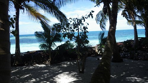 The entire island has palm fronds and conchs piled between the beach and the rest of the island.