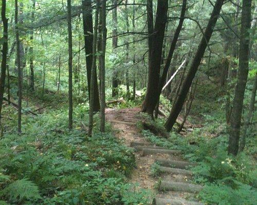 A shady trail through the park.
