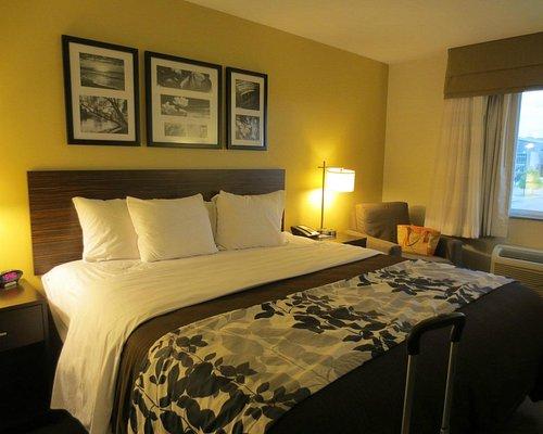 Bed Bugs Review Of Staybridge Suites Grand Forks Grand Forks Nd Tripadvisor