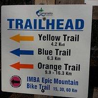 Ganaraska Forest's EPIC IMBA-designated Mountain Bike Trail