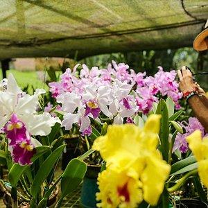 Orchids tour Colombia