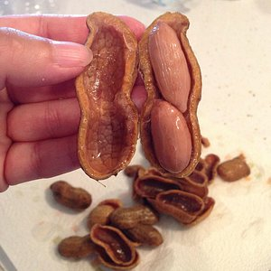 Boiled Peanuts as big as your hand!