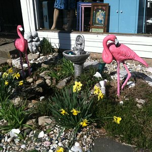 Look For The Pink Flamingos !!!