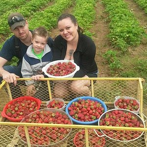 all our strawberries!