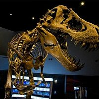 Meet Stan, the 40-foot T.rex