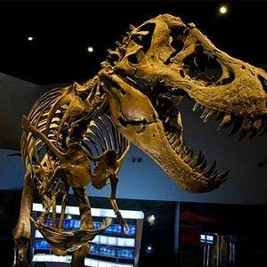 Meet Stan, the 40-foot T.rex