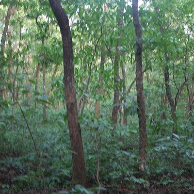 Thekadi forest