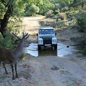 Visita Parque Natural de los Alcornocales 4x4