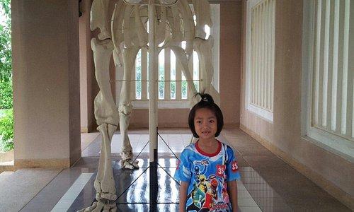 ช ช้าง เหลือแต่กระดูก