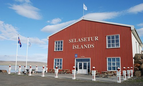 Welcome to the Icelandic Seal Center