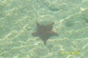 Star Fish Beauty