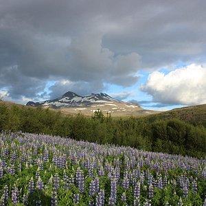 Beautiful mountain vista on climb to Glymur