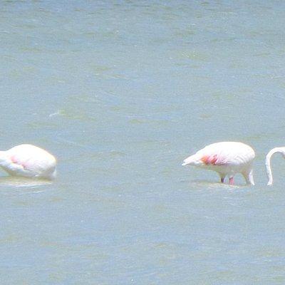Vista de mas cerca de los Flamencos Rosas