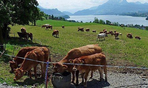 Restaurant und Landwirtschaft