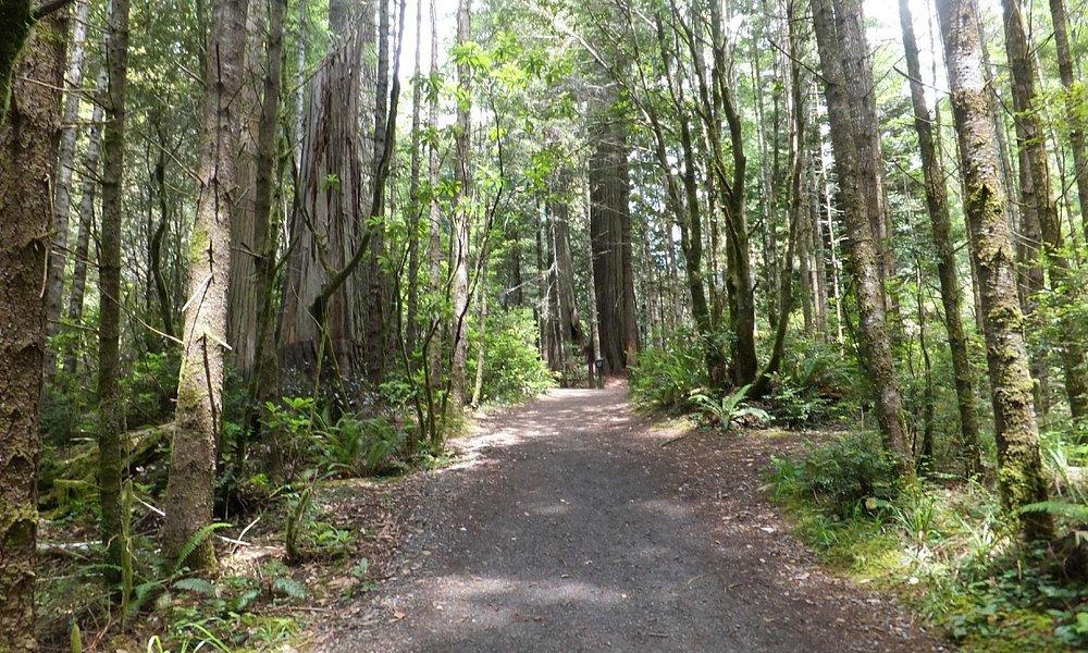 Path along Lady Bird Johnson Grove