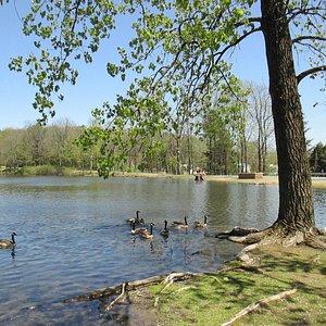 beautiful walk and picnic