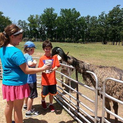 Feeding the emu.