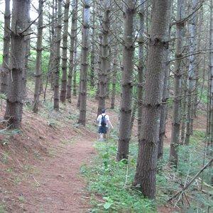 River Run Trail