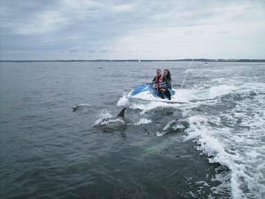 Balade jet-ski avec dauphin SSP Location