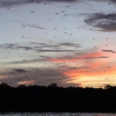Bat cloud