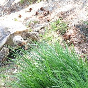 watching the tortise