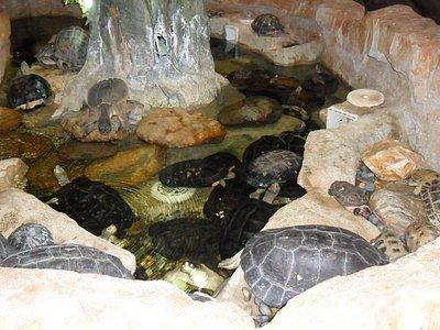 Main turtle/tortoise enclosure