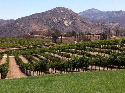 more vineyard