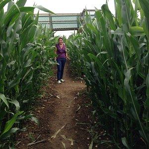 Fun in the maze !