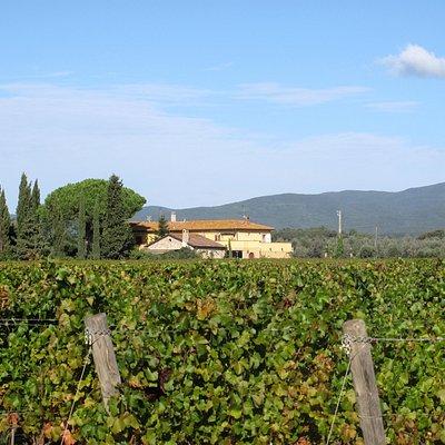Batzella winery estate