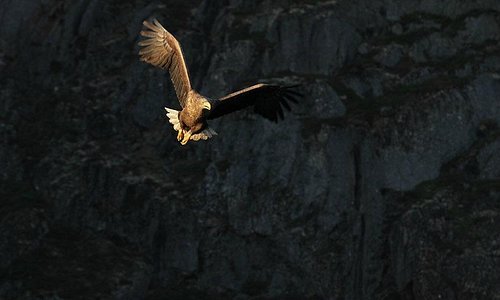 Nordland is the kingdom of the sea eagle.  Here you will find the world's densest population of